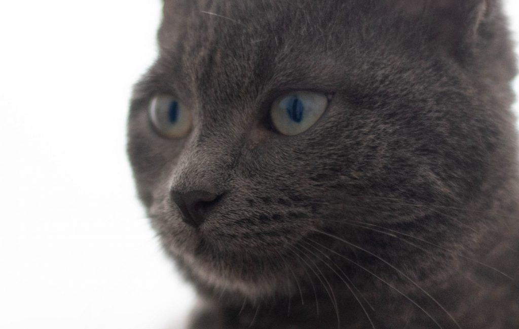 Photographe animalière pour chat