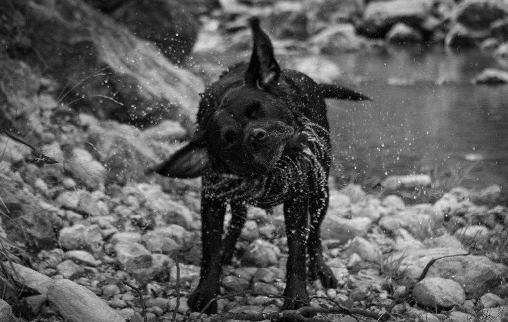 Photo animaux, chien